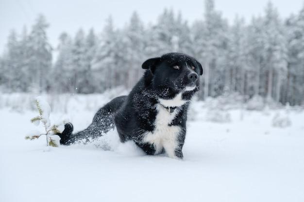 Gelukkig gemengd rashond die in de winter buiten rent