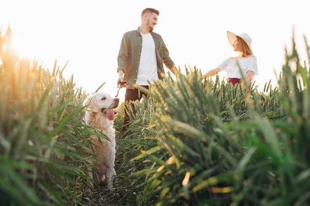 Gelukkig jong stel loopt met hun golden retriever in velden op zomeravond. liefde en tederheid. mooie momenten van het leven. rust en zorgeloosheid. wandelen in de natuur.