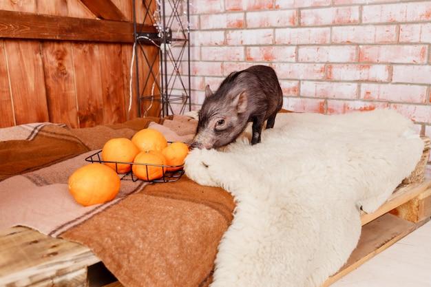Gelukkig nieuwjaar. dier en fruit. creatieve vakantiebanner met klein zwart varken, symbool van 2019 in de chinese kalender.