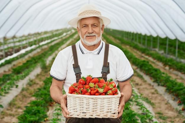 Gelukkig oude man in uniform en hoed staande op aardbeienplantage met mand met zoete bessen in handen. ervaren boer lacht en kijkt naar de camera buitenshuis.