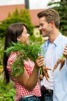 Gelukkig paar in hun tuin het oogsten wortelen