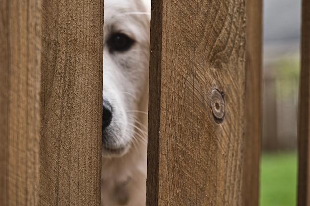 Gelukkig puppy buiten uitgevoerd