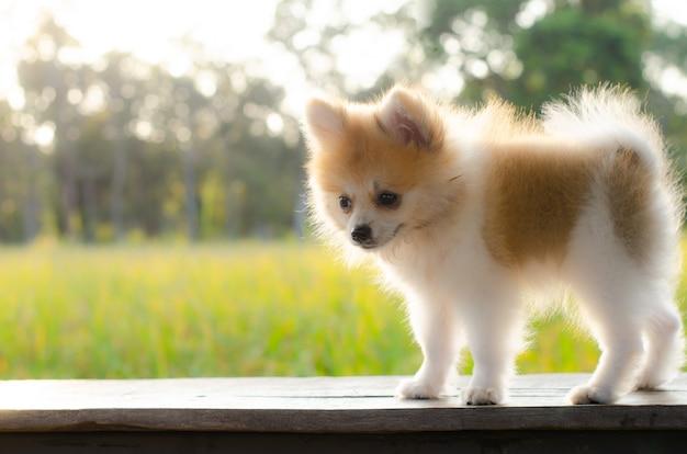 Gelukkig puppy dat in motiespel wordt gevangen op hout.