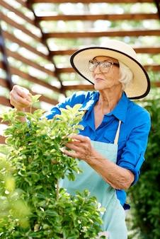 Gelukkig senior vrouw zorg voor planten