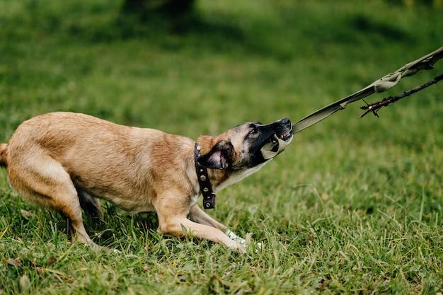 Gelukkig speels dartel snel en woedend puppy dat van vrijheid bij aard geniet. gekke gekke vrolijke vrolijke kleine hond rennen en springen buiten. onrustig huisdier spelen. blij actieve aminal