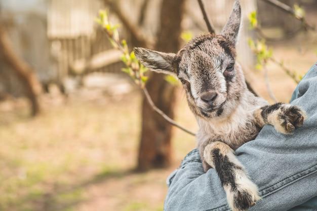 Gelukkig tienermeisje met een geit in haar armen