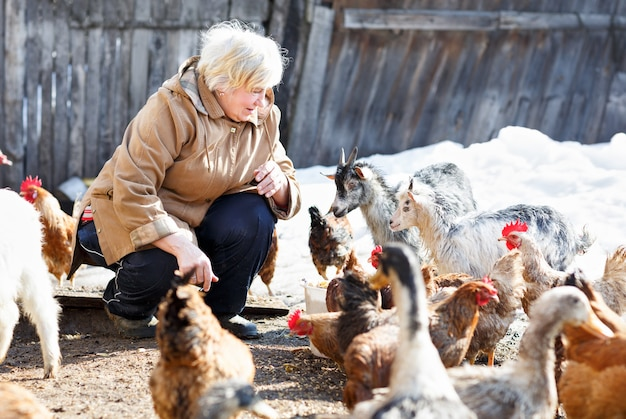 Gelukkig volwassen vrouw geeft kleine geiten en kippen op eigen boerderij