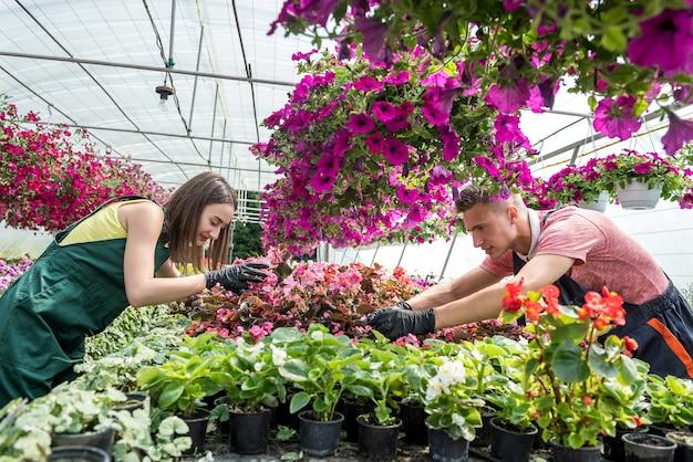 Gelukkige arbeiders in de kas die veel verschillende bloemen te koop aanbieden. familiebedrijf
