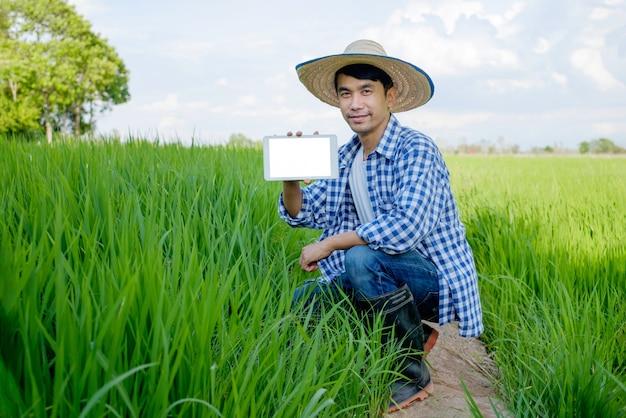 Gelukkige aziatische mannelijke landbouwer die een tablet in het padieveld gebruiken