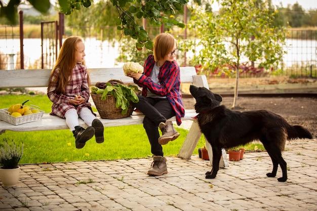 Gelukkige broer en zus met mand met seizoensgebonden voedsel in een tuin buiten samen.