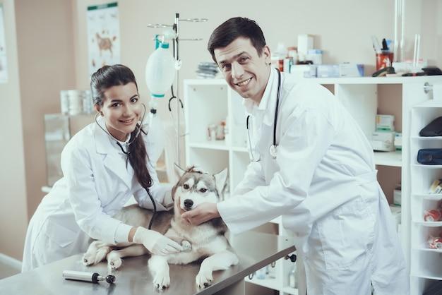 Gelukkige dierenartsen onderzoeken hart van husky.