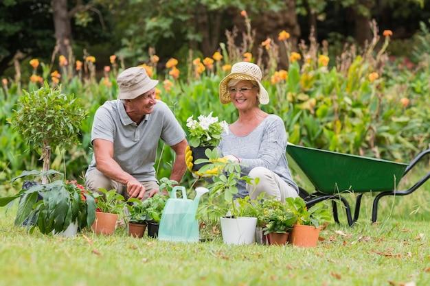 Gelukkige grootmoeder en grootvader tuinieren