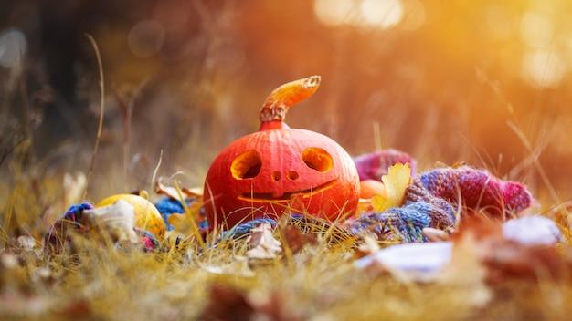 Gelukkige halloween-pompoen met gelukkig gezicht in de herfstbos