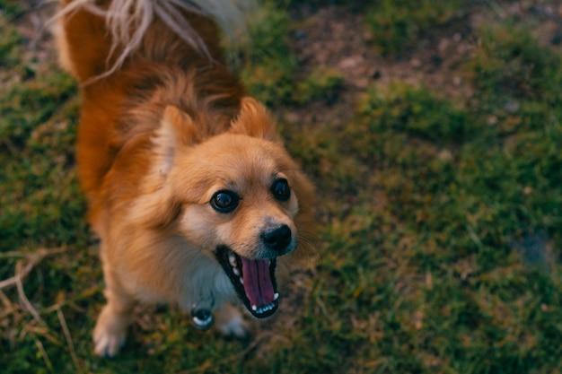 Gelukkige hond die een grappig gezicht maakt.