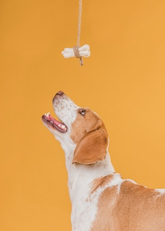 Gelukkige hond die omhoog een been bekijkt