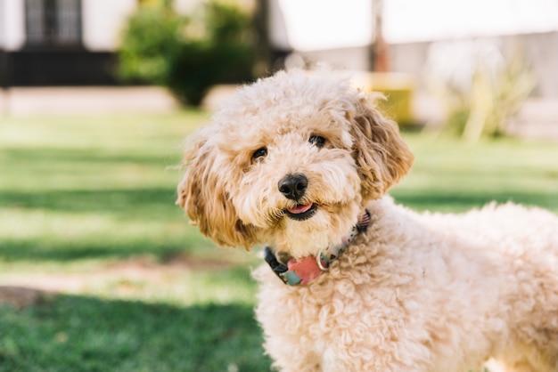 Gelukkige hond die pret in het park heeft