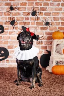 Gelukkige hond in halloween-kostuum