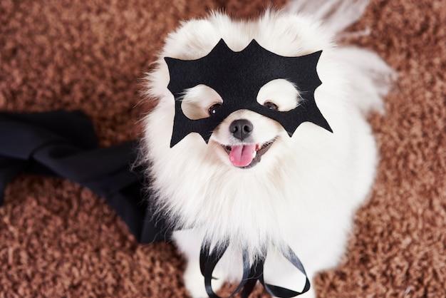 Gelukkige hond in superheldenkostuum