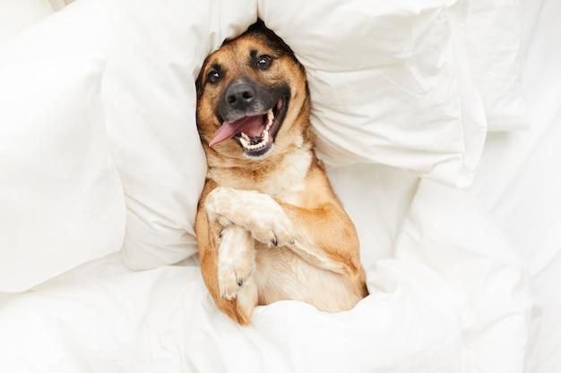 Gelukkige hond liggend in een comfortabel bed