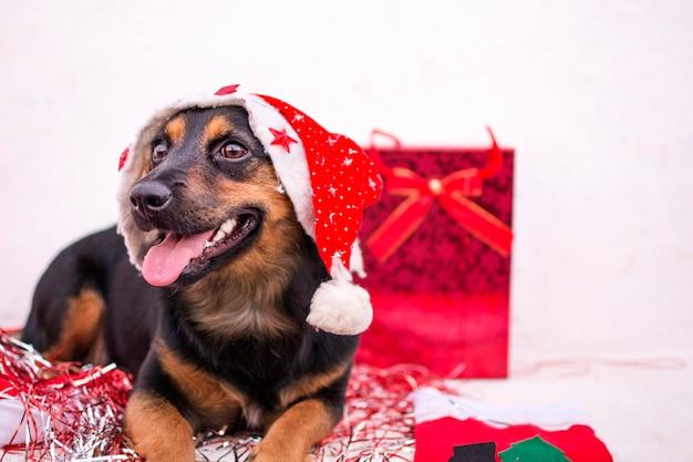 Gelukkige hond met rode kerstmuts en geschenken om hem heen