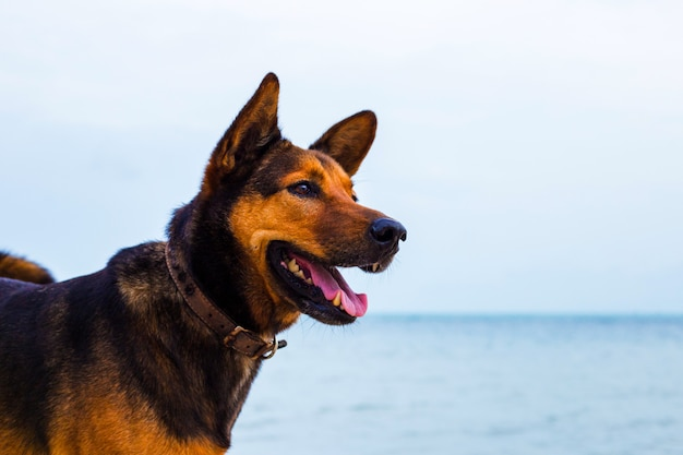 Gelukkige hond ontspannen op het strand.