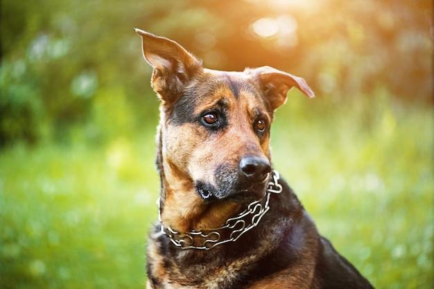 Gelukkige hond op groen gras
