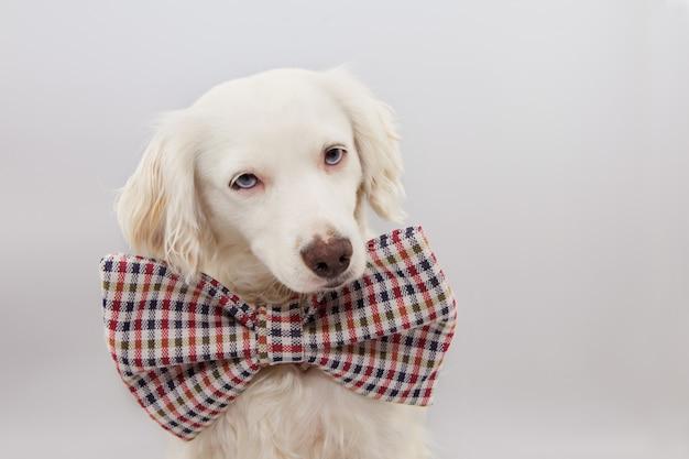 Gelukkige hond viert een verjaardag, nieuwjaar of carnavalpartij.