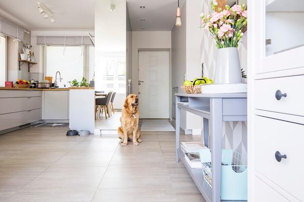 Gelukkige hond zit in open ruimte keuken interieur in echte foto met verse bloemen en groene appels geplaatst op blauwe console tafel