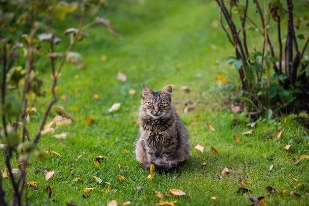 Gelukkige kat op groen grasachtergrond in de herfsttijd.