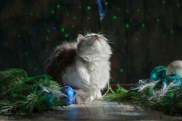 Gelukkige kat speelt met kerstspeelgoed. kat spelen met speelgoed van kerstmis.