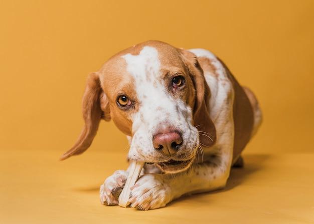 Gelukkige schattige hond die een been eet