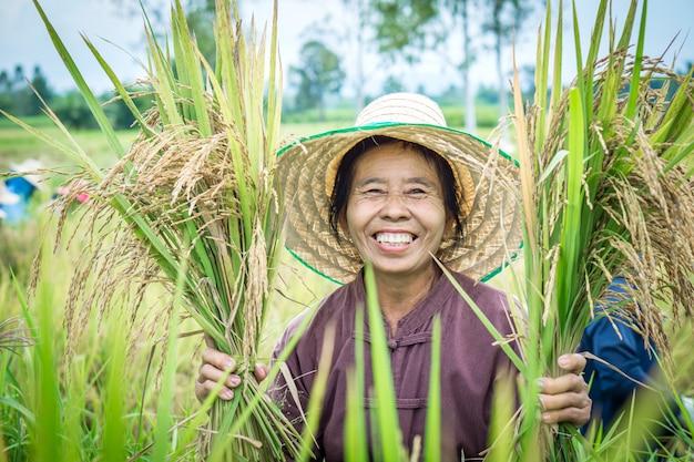 Gelukkige thaise vrouwelijke boer oogsten rijst