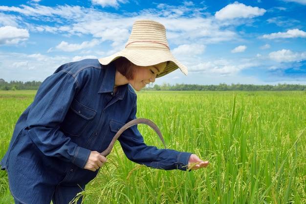 Gelukkige thaise vrouwelijke landbouwer het oogsten rijst in platteland thailand