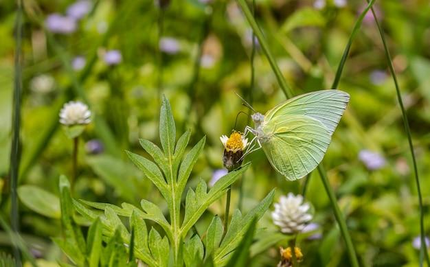Gelukkige tijd van vlinders in zonnige dag