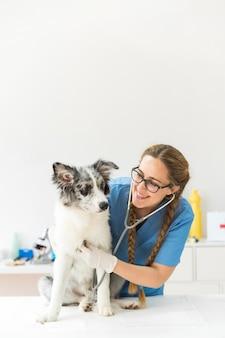 Gelukkige vrouwelijke dierenarts die de hond met stethoscoop op lijst in kliniek onderzoeken