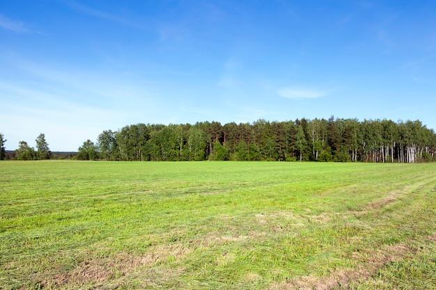 Gemaaid gras in de buurt van het bos. lente landschap met bos op de achtergrond. weiland met gestreept