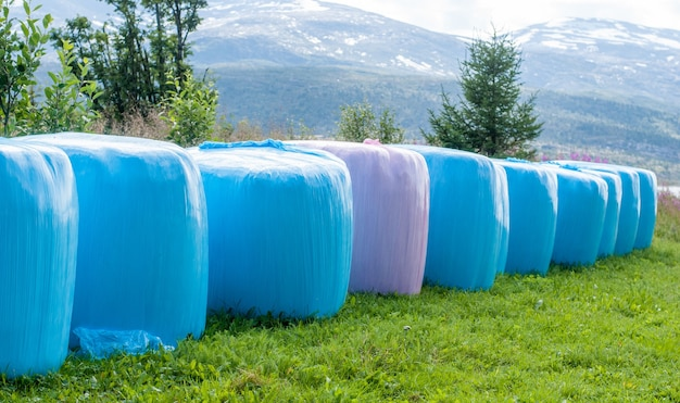 Gemaaid hooi verpakt in roze en blauwe polyethyleen balen op het veld, noorwegen