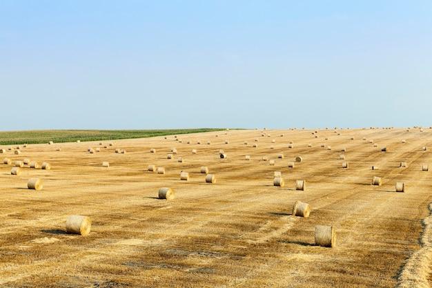 Gemaaid stro dat overblijft na het oogsten van tarwe
