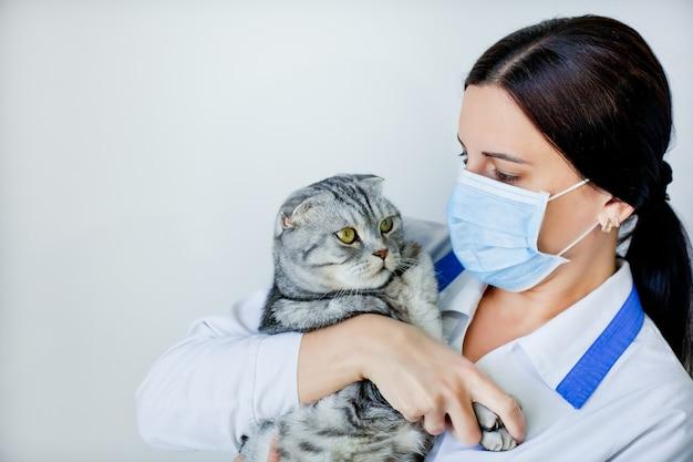 Gemaskerde dierenarts met een grijs gevouwen kat in zijn armen.
