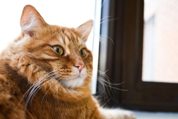 Gember dikke kat ligt op de vensterbank