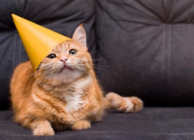 Gember kat op de bank in een feestelijke pet