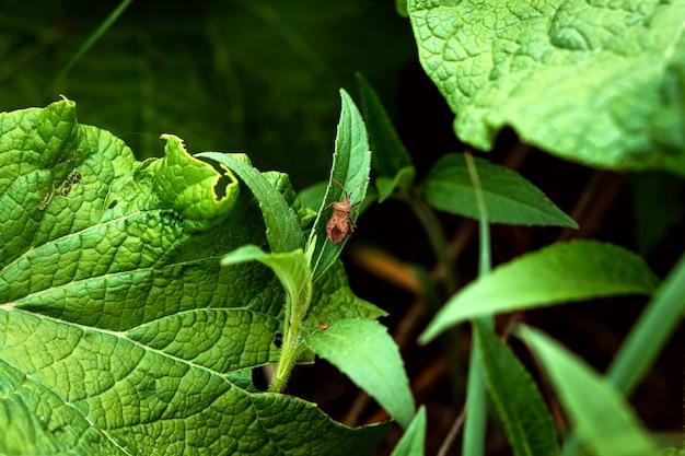 Gemberbalein insect op een groen blad.