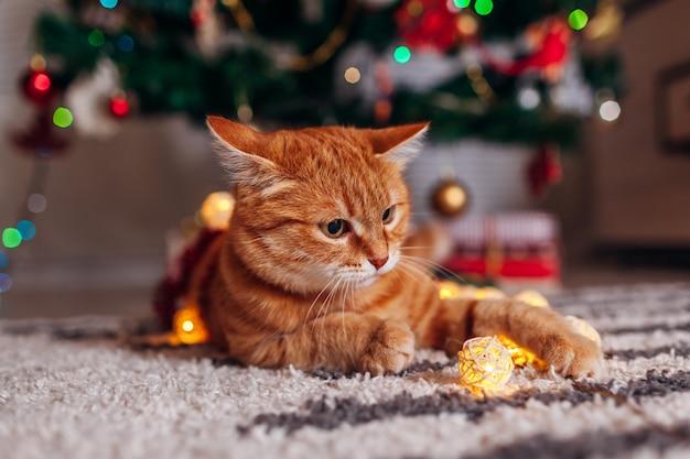 Gemberkat het spelen met slinger onder kerstboom. kerstmis en nieuwjaar concept