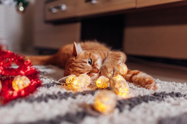 Gemberkat het spelen met slinger onder kerstboom