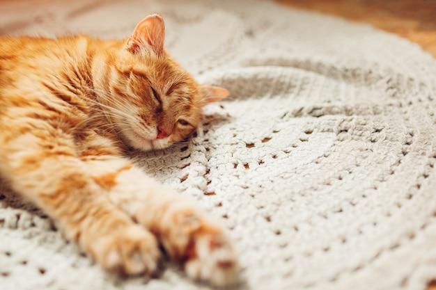 Gemberkat sleepng op laag in woonkamer die met kussens wordt omringd