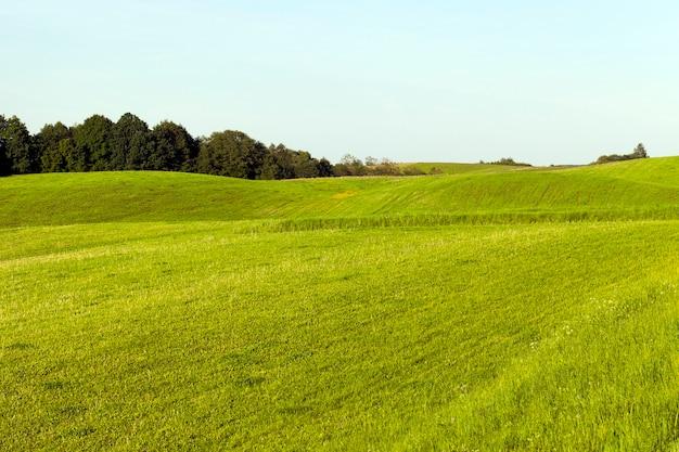 Gemengd bos met bomen van verschillende grootte voor het veld van de rivier, een zomerlandschap op een heuvelachtig terrein, een deel van het gras werd gemaaid voor veevoeder