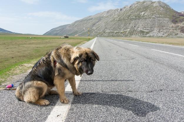 Gemengd ras op de weg in de bergen