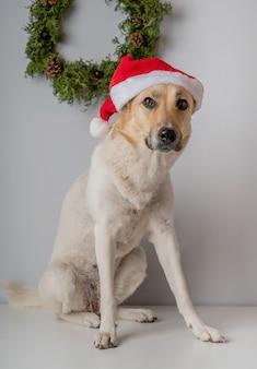 Gemengde rassenherdershond die santahoed draagt