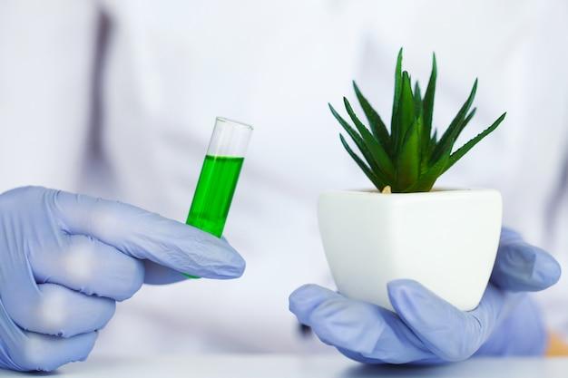 Geneeskunde. natuurlijke organische geneeskunde en gezondheidszorg, alternatieve plantengeneeskunde, mortel en kruidenextractie in laboratoriumglaswerk