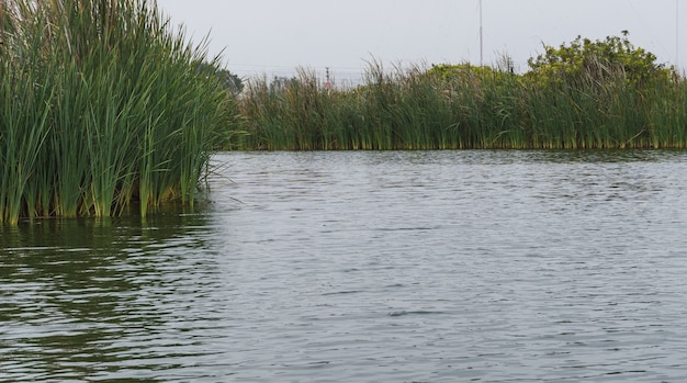 Genesis-lagune in pantanos de villa, grote lagune omringd door totora-planten in chorrillos lima peru